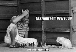 Ask yourself: WWYCD?
