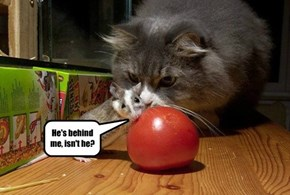 Maybe He Just Wants the Tomato...