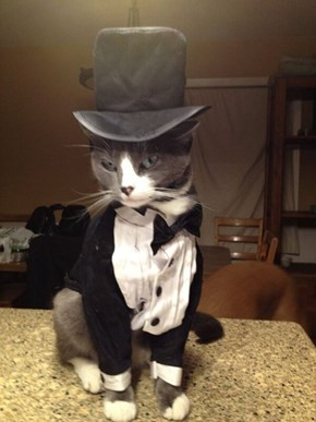Every Girl's Crazy 'Bout a Sharp-Dressed Cat