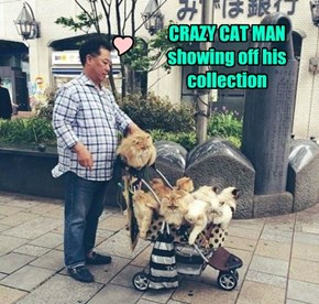 CRAZY CAT MAN showing off his collection
