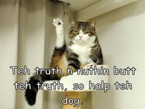 Teh truth n nuthin butt teh truth, so halp teh dog.
