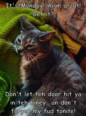 It's Monday! Ai'm a cat! Get it?   Don't let teh door hit ya in teh hiney, an don't forget my fud tonite!