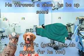 He throwed a shoe, he be up soon!  Yor fren Pc (gotta lots ub apples fur he too)