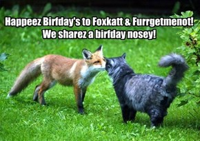 Fwends Foxy n' Furrgy Share Birfday Nosey cause we shares birfdays!