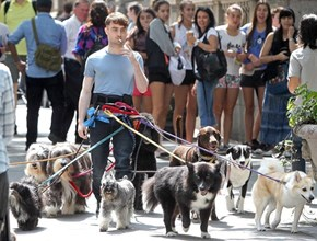 Daniel Radcliffe Casts His Magic on a Pack of Dogs