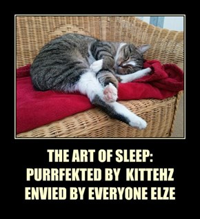 THE ART OF SLEEP: PURRFEKTED BY  KITTEHZ ENVIED BY EVERYONE ELZE