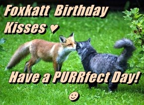Foxkatt  Birthday  Kisses ♥  Have a PURRfect Day! ☻