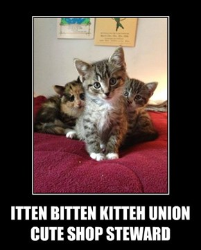 ITTEN BITTEN KITTEH UNION CUTE SHOP STEWARD
