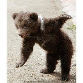 I Can Bearly Touch My Toes