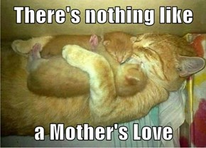 There's nothing like  a Mother's Love