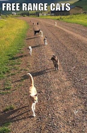 FREE RANGE CATS