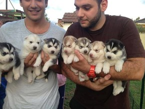 Handfuls of Puppy Squee