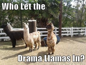 Who Let the   Drama Llamas In?