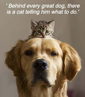 ' Behind every great dog, there is a cat telling him what to do.'