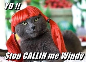 YO !!  Stop CALLIN me Windy