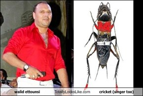 walid ettounsi Totally Looks Like cricket (singer too)