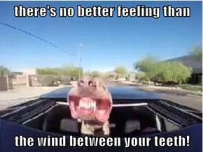 there's no better feeling than   the wind between your teeth!