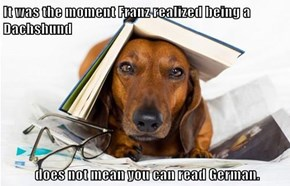 It was the moment Franz realized being a Dachshund   does not mean you can read German.
