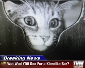 Breaking News - Wut Wud YOO Doo Fur a Klondike Bar?