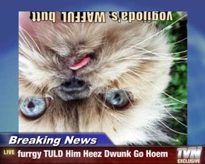 Breaking News - furrgy TULD Him Heez Dwunk Go Hoem