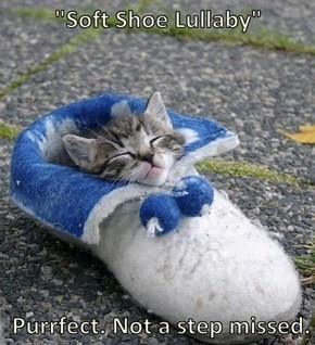 """Soft Shoe Lullaby""   Purrfect. Not a step missed."