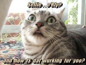 Selfie . . o'Rly?  and  how  IS  dat  wurking  fur  yoo?