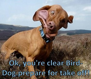 Ok, you're clear Bird-Dog.prepare for take off!