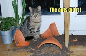 The ants did it !
