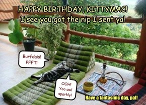 HAPPY BIRTHDAY, KITTYMAC!   I see you got the nip I sent ya!
