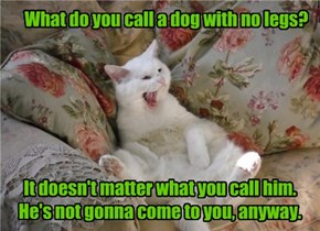 Cats Love A Good Dog Joke