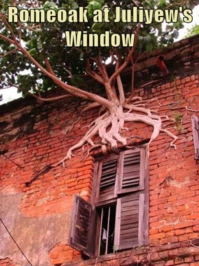 Romeoak at Juliyew's Window