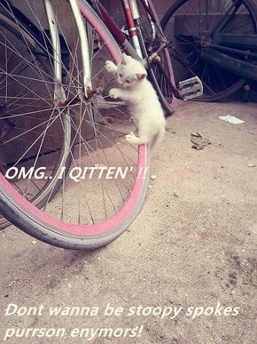 OMG.. I QITTEN' !! Dont wanna be stoopy spokes purrson enymors!