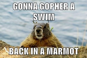 GONNA GOPHER A SWIM  BACK IN A MARMOT
