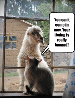 You can't come in now. Your timing is really baaaad!
