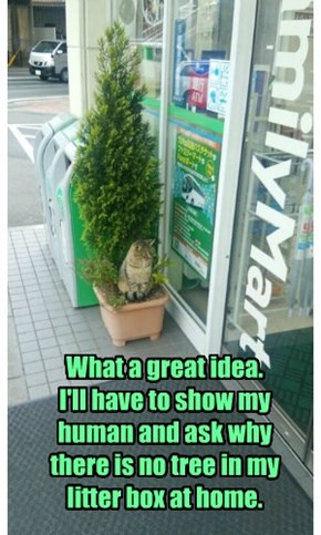 What a great idea.  I'll have to show my human and ask why there is no tree in my litter box at home.