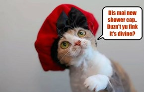 A bery fashionable kittie..