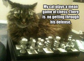 My cat plays a mean game of chess. There  is  no getting through  his defense.