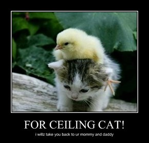 FOR CEILING CAT!