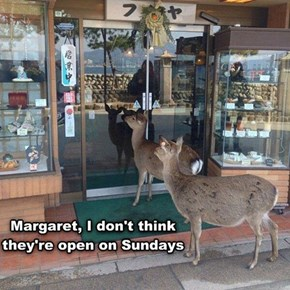 Who Knew Deer Loved Pastries So Much!