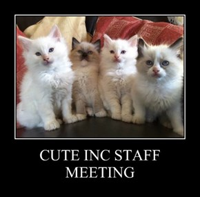 CUTE INC STAFF MEETING