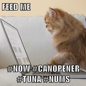 FEED ME  #NOW #CANOPENER #TUNA #NUMS