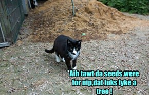 Aih tawt da seeds were for nip,dat luks lyke a tree !