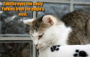 Tabitha eyes the nasty Yorkies from the eagle's nest.