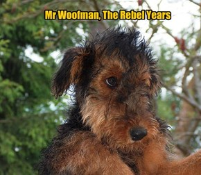 Mr Woofman, The Rebel Years