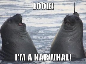 Did You do That on Porpoise?