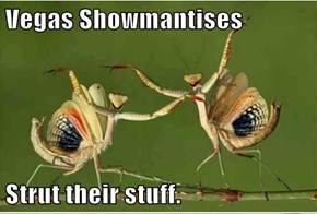 Vegas Showmantises  Strut their stuff.