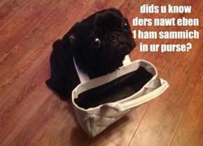 dids u know ders nawt eben 1 ham sammich in ur purse?