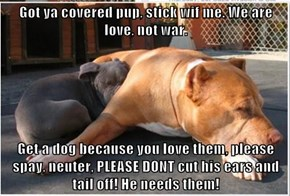 Got ya covered pup, stick wif me. We are love, not war.   Get a dog because you love them, please spay, neuter, PLEASE DONT cut his ears and tail off! He needs them!