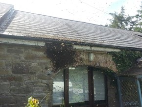 NOPE of the Day: The Bees Have Taken Over