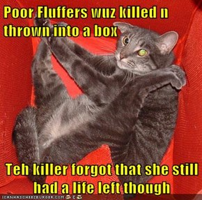 Poor Fluffers wuz killed n thrown into a box  Teh killer forgot that she still had a life left though
